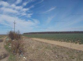 Chiajna teren agricol