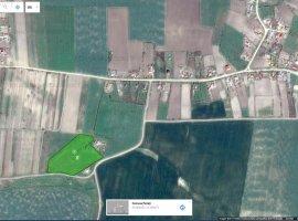 Teren cu potential de dezvoltare rezidentiala in Paltinisu, Ialomita