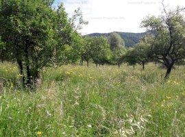 Vanzare teren de 7129 mp, Tautii de Sus, Maramures