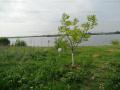 Pantelimon- Lac Lebada