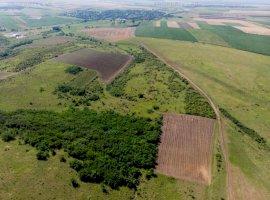 Teren 300 hectare Recaș