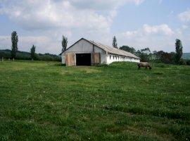 Vanzare  terenuri agricol  47.8 ha Mures, Saschiz  - 85000 EURO
