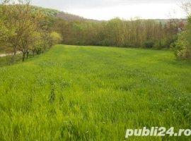 Vanzare  terenuri constructii  7000 mp Arges, Babana  - 0 EURO
