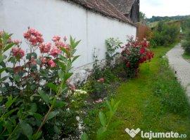 Vanzare  casa Mures, Apold  - 85000 EURO