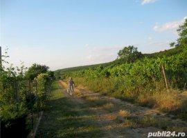 Vanzare  terenuri constructii  1 mp Arad, Cuvin  - 8 EURO