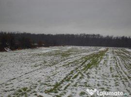 Vanzare  terenuri agricol  5000 mp Dambovita, Bolovani  - 3900 EURO