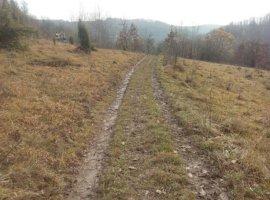 Vanzare  terenuri agricol  20 ha Arad, Grosii Noi  - 10000 EURO