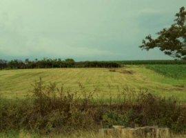 Vanzare  terenuri agricol  21 ha Timis, Traian Vuia  - 12000 EURO