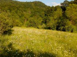 Vanzare  terenuri agricol  6000 mp Covasna, Crasna  - 0 EURO