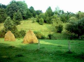 Vanzare  terenuri agricol Arges, Cerbureni  - 3957 EURO