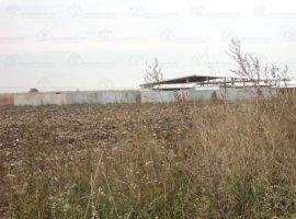 Vanzare  terenuri agricol  42 ha Timis, Giroc  - 352000 EURO