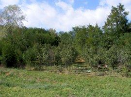 Vanzare  terenuri constructii Dambovita, Varfuri  - 9999 EURO