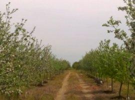 Vanzare  terenuri agricol  900 ha Arad, Nadlac  - 86000 EURO