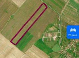 Vanzare  terenuri constructii Timis, Pischia  - 2 EURO
