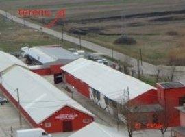 Vanzare  terenuri agricol  5000 mp Timis, Urseni  - 0 EURO