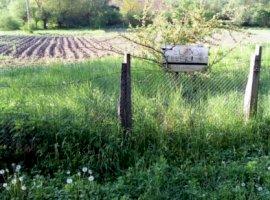 Vanzare  terenuri constructii  3000 mp Mures, Sacareni  - 15000 EURO