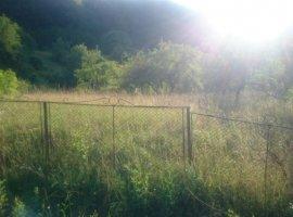 Vanzare  terenuri agricol Timis, Nadrag  - 21000 EURO