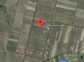 Vanzare  terenuri constructii  693.7 ha Timis, Mosnita Veche  - 17300 EURO
