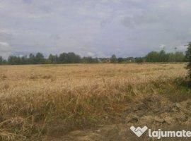 Vanzare  terenuri constructii  5000 mp Ilfov, Ordoreanu  - 50000 EURO