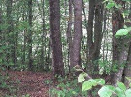 Vanzare  terenuri agricol  3500 mp Arges, Bradetu  - 0 EURO