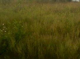 Vanzare  terenuri constructii  2500 mp Constanta, Negru Voda  - 20000 EURO