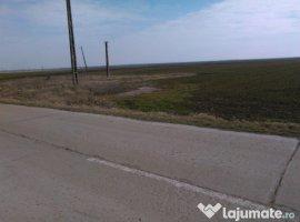 Vanzare  terenuri agricol  10000 mp Timis, Satchinez  - 7000 EURO