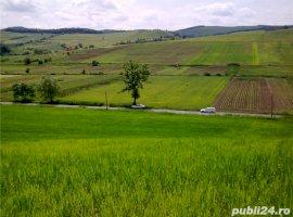 Vanzare  terenuri constructii Mures, Tofalau  - 0 EURO