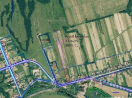 Vanzare  terenuri constructii  4300 mp Timis, Balint  - 2500 EURO